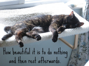 Conscious Cat Sunday: A Day of Rest