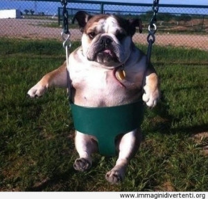 Divertente cane in un altalena immaginidivertenti.org