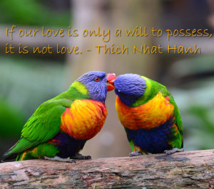 Images of Love Birds with Quotes