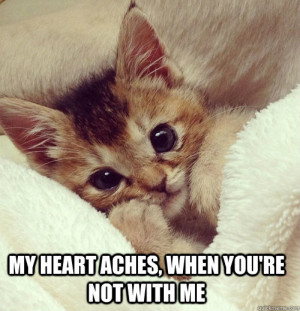 CAT-MEME-facebook.jpg