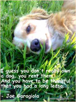 grief quotes about dogs, I guess you don't really own a dog, you rent ...
