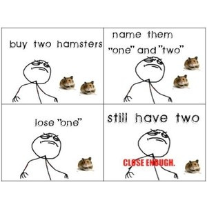 Related Pictures funny hamsters hamster song