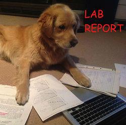 LOL dog funny puppy pun work homework science labrador lab report
