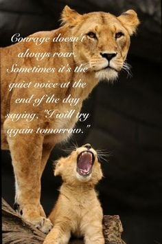 Lioness Quotes Women Courage More