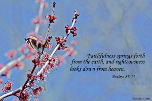 ... sure to link up with Katie for more inspiring Snapshot and Scriptures