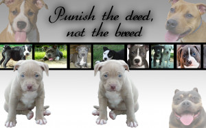 Pitbull Puppy Wallpaper by PiinkylOve19 on deviantART