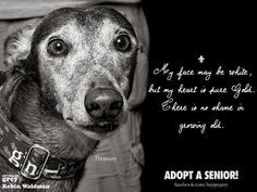 Quotes About Old Dogs