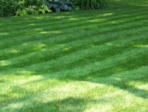 Grass Cutting Heights