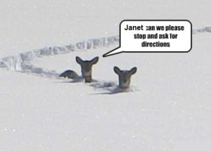 in Animal Jokes , Funny Animal Pictures