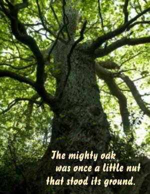 The Mighty Oak Was Once A Little Nut