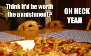 funniest dogs with sweet sayings, funny dogs with sweet sayings
