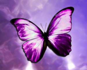 Butterflies Purple Butterflies ♡