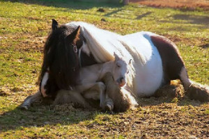 pictures were takenimmediately after his birth on April 6. The mare ...
