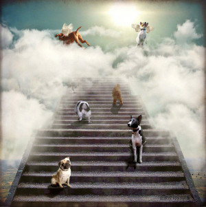 ... to a very thirsty man these dogs go to heaven with yous don t they