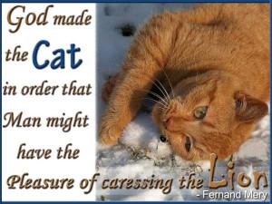 Beautiful cat quotes pics