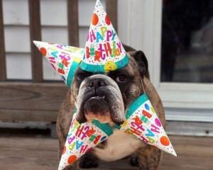 funny animal happy birthday