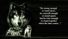 Cool Wolf Sayings   animal black, pack, the pack, wolves, quotes ...