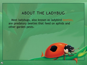 ... with information about ladybugs in general, like a short description