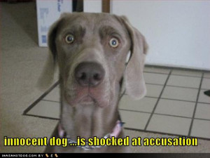 funny-dog-pictures-schocked-innocent-dog.jpg