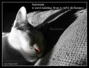 cat-insomnia-quote-cute-odin