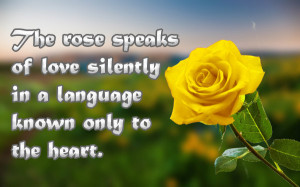 Quote Saying On Rose With YEllow Rose Image