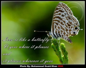 Beautiful Butterfly Quotes And Sayings About Happiness: Butterfly ...