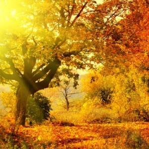 10 Beautiful Autumn Quotes