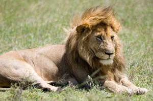 Inspirational Wild Animal Quotes 10 inspirational nature quotes