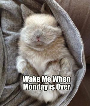 Funny-Monday-MEME-and-LOL.jpg