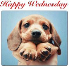 Happy Wednesday quotes quote wednesday hump day wednesday quotes happy ...