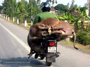 funny-indian-road-transport-indian-funny-pictures.jpg
