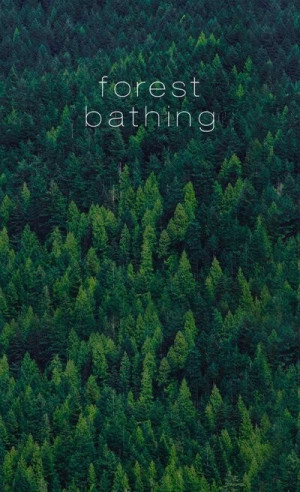 Forest Bathing.
