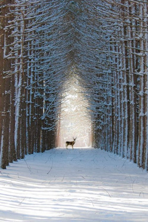 Do you love to experience snow for the walking down a street like this ...