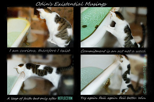 Existential-musings-cat-bath-odin-quotes