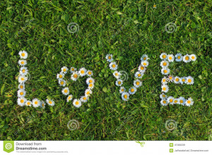 Daisy Flowers spelling Love in the grass.
