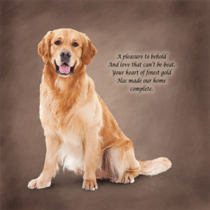 Golden Retriever Pictures With Sayings Golden retriever poetic
