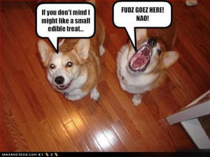 dog quotes funny. Funny Cats And Dogs.