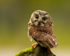 An owl being wherever it wants to be.