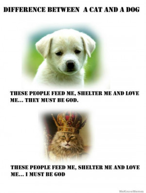 difference-between-a-cat-and-a-dog-comic