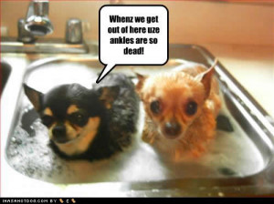 ... funny baby pictures funny dog cute sweet fine dogs wallpapers dog