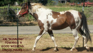 Displaying (20) Gallery Images For Horse Ecards...