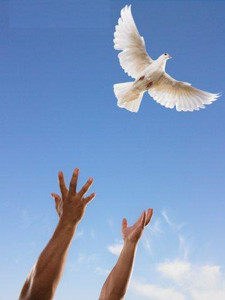 Emotional Freedom is a transformative five-day experience that will ...
