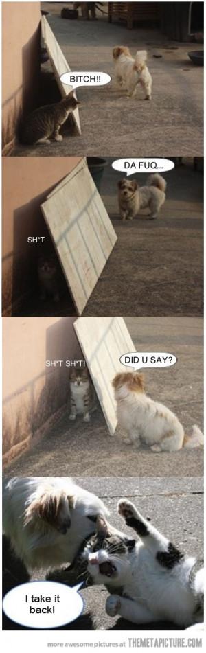 Funny photos funny cat dog fight
