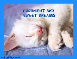 Dreams sweet dreams kitten