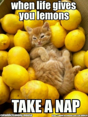 when life gives you lemons, take a nap