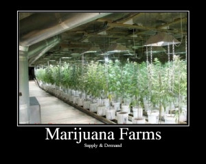 Marijuana Farms
