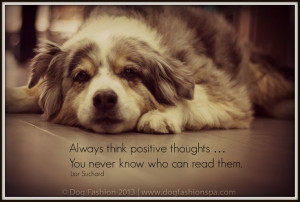 ... Positive and Discover Quality Life for Dogs: www.dogfashionspa.com #