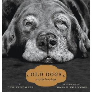 November: Adopt-a-Senior Pet Month