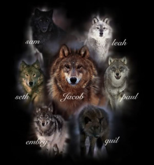 high resolution wolf wisdom desktop laptop wallpaper ...
