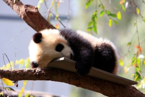 Google Panda Update Rolls Out With New Signals